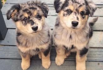 l-Twins